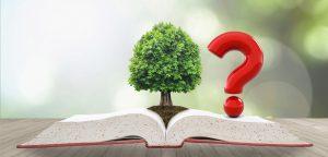 Treedt de Omgevingswet dankzij of ondanks het DSO in werking?