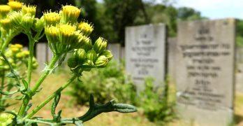 Islamitische begraafplaatsen